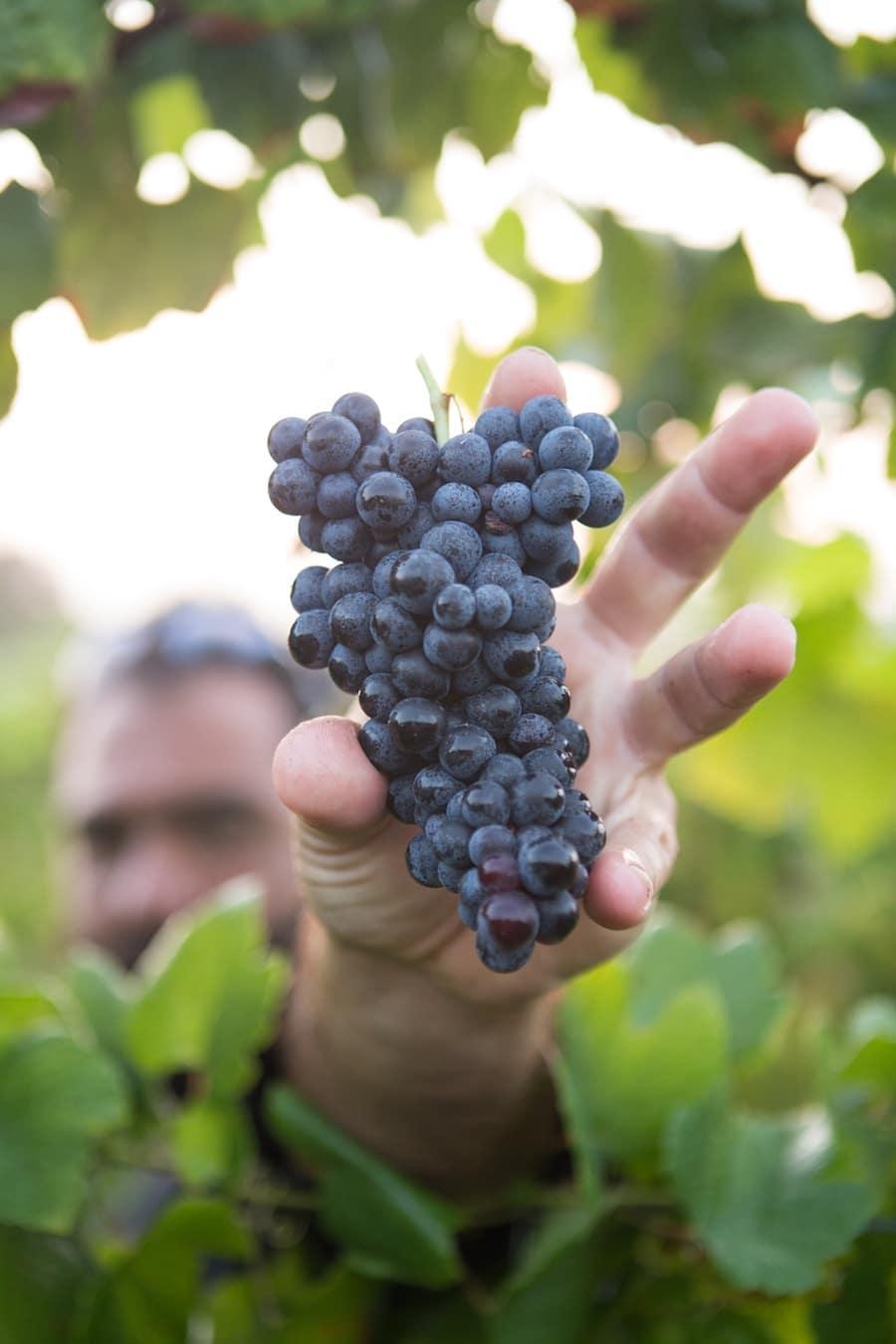 Entretenir son domaine viticole, mode d'emploi